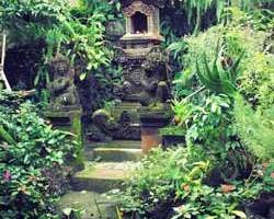 balinese garden plants – Backyard And Front Yard Landscaping Ideas